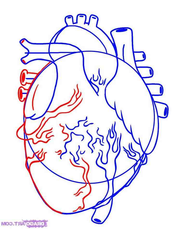 Comment dessiner l'architecture d'un cœur humain