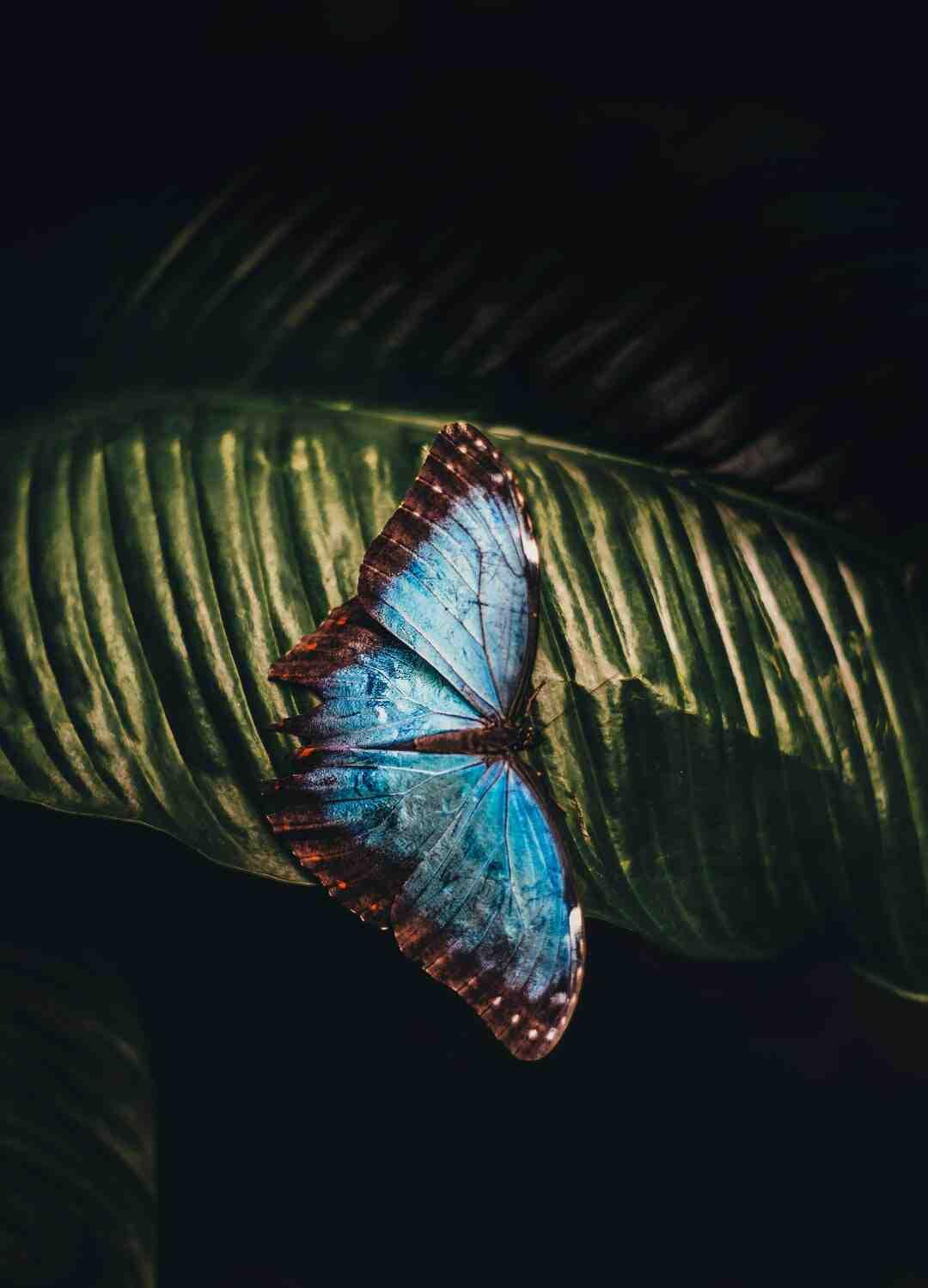 Comment dessiner un papillon en maternelle ?