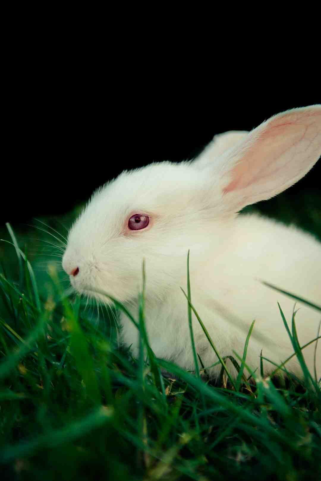 Comment dessiner le lapin de Pâques